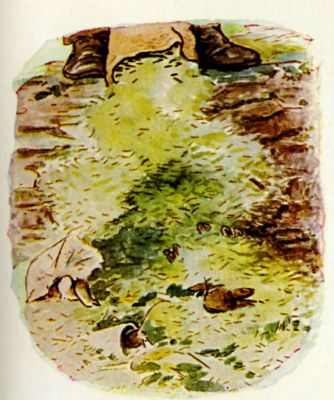 Beatrix Potter illustration Flopsy Bunnies - man's shoes in forest