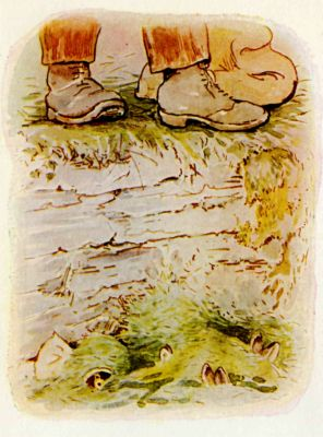 Beatrix Potter illustration Flopsy Bunnies - shoes and hiding bunnies