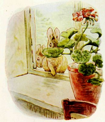 Beatrix Potter illustration Flopsy Bunnies - rabbits in window with flower pot