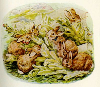 Beatrix Potter illustration Flopsy Bunnies - baby rabbits eating lettuce