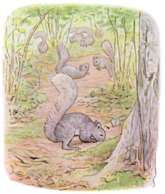 Tale of Timmy Tiptoes by Beatrix Potter - illustration of squirrels foraging in forest