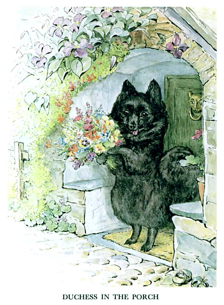 Illustration of black dog on hind legs for kids story Pie Patty Can by Beatrix Potter