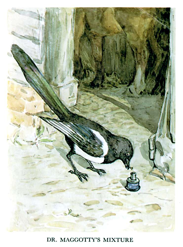 Illustration of blackbird for kids story Pie Patty Can by Beatrix Potter