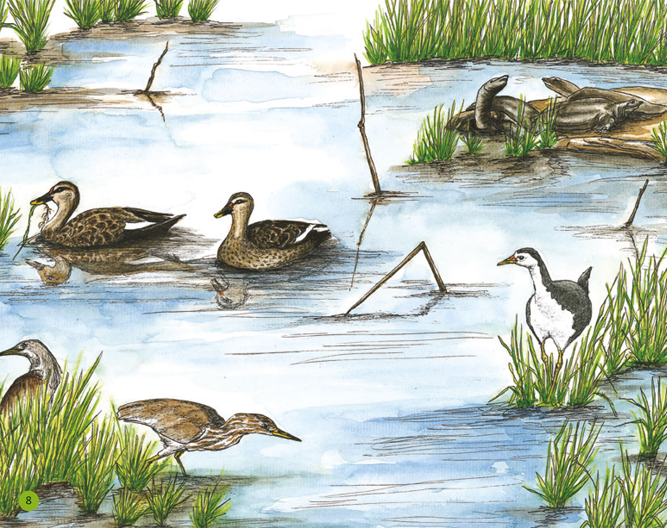 Bedtime story Wildlife in a City Pond page 10