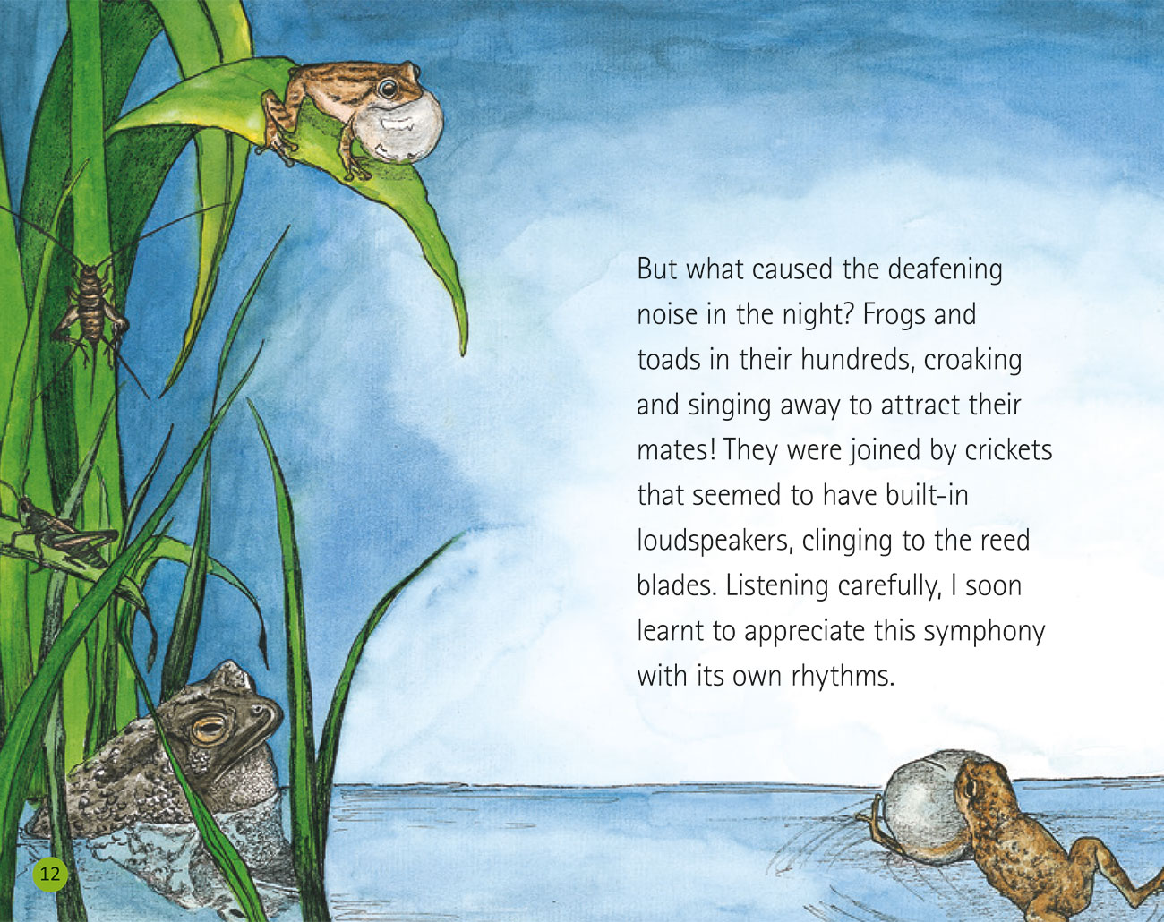 Bedtime story Wildlife in a City Pond page 14