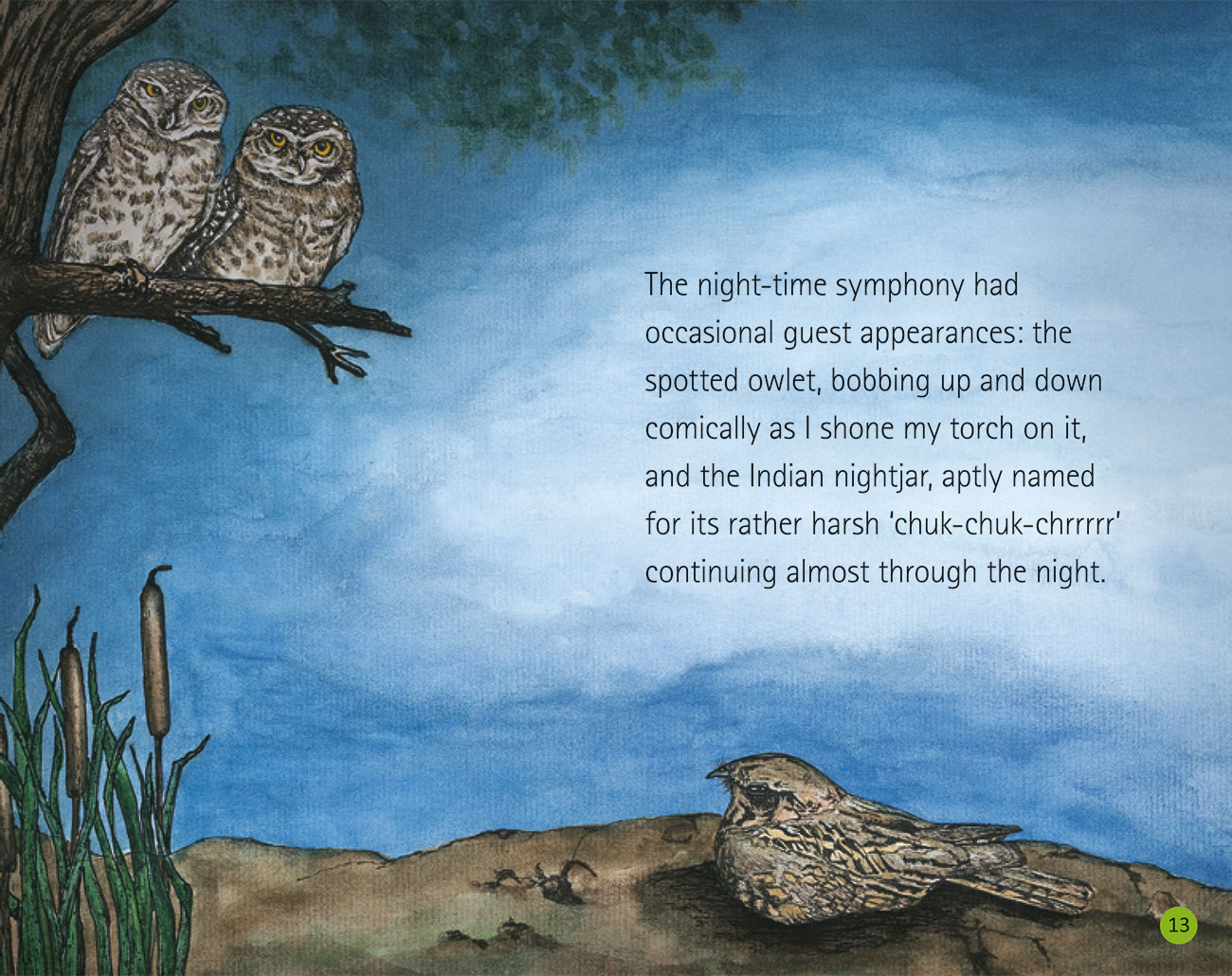 Bedtime story Wildlife in a City Pond page 15