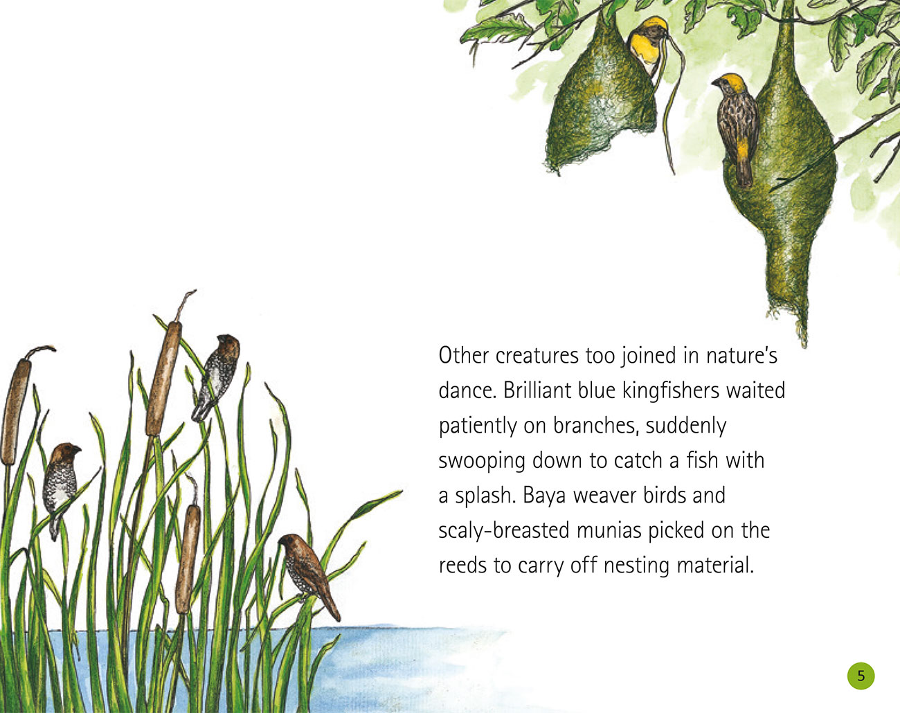 Bedtime story Wildlife in a City Pond page 7