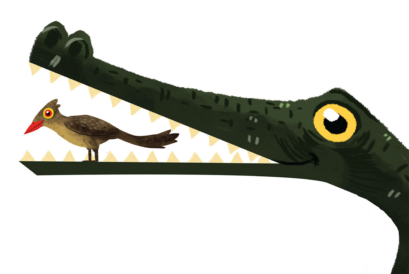 Picture books - Who Is Our Friend - Header illustration of crocodile and bird cleaning teeth