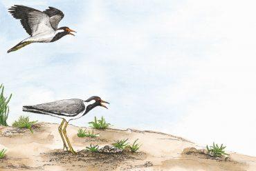 Wildlife In a City Pond - Children's Picture Book header illustration of birds