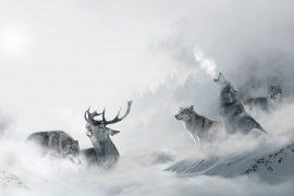 Illustration of wolves in snow for children's poem Frost