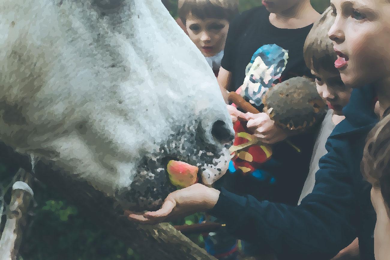 Short stories for kids - An Autumn Walk - illustration of white horse eating apple