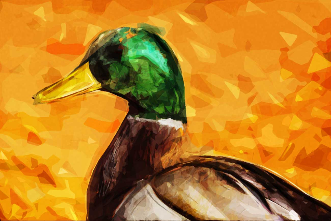 Poems for kids D is for duck illustration