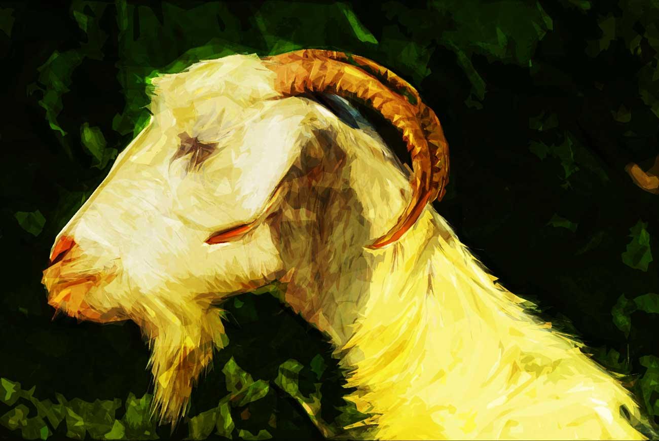 Poems for kids G is for goat illustration