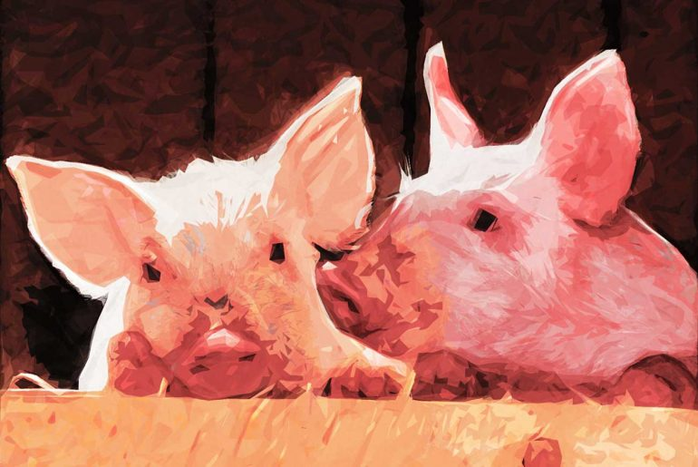 Poems for kids P is for pig illustration