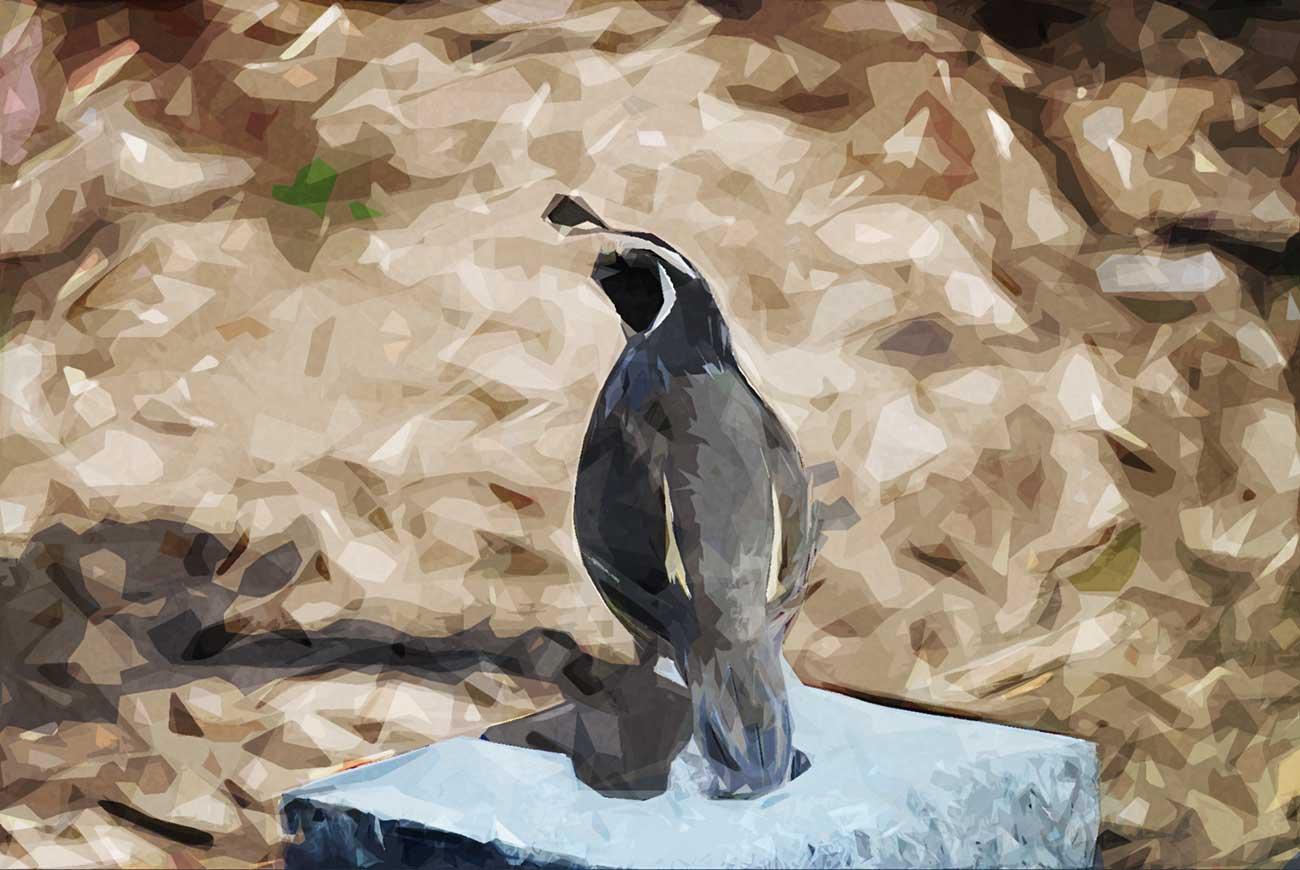 Poems for kids Q is for quail illustration