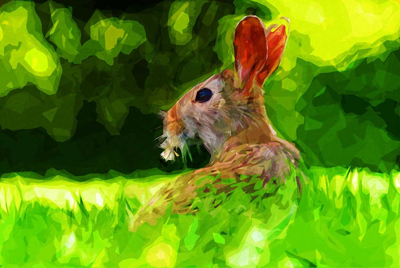 Poems for kids R is for rabbit illustration