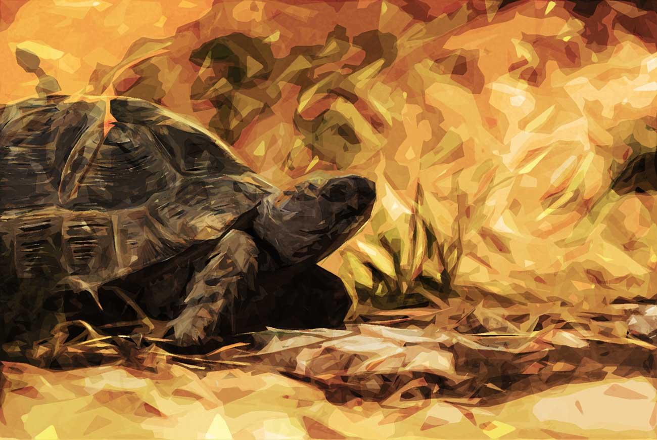 Poems for kids T is for tortoise illustration