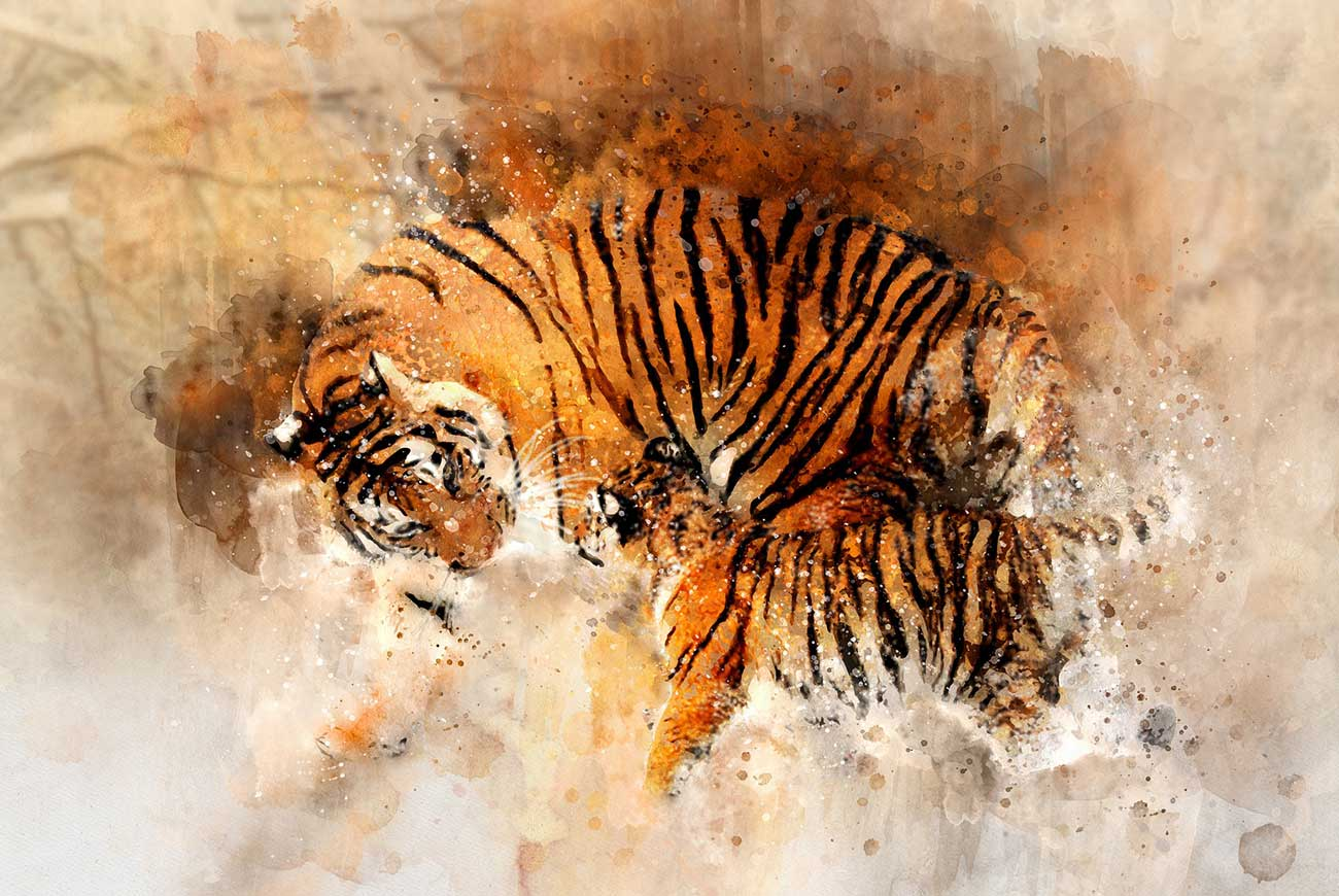 Short story for kids about peace- 100 White Doves illustration of tigers fighting