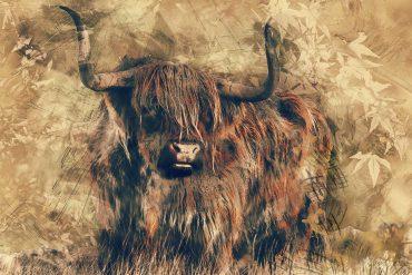 Black Bull of Norroway Scottish Fairy Tales