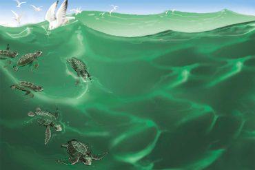 Bedtime stories Turtle Story short stories for kids header
