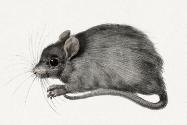 Fairy Tales illustration The Little Good Mouse by Countess dAulnoy