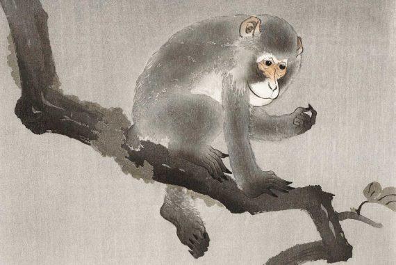 French Fairy Tales illustration Babiole monkey Madame dAulnoy